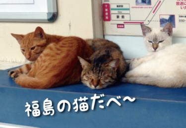 福島県の猫スポット 17選