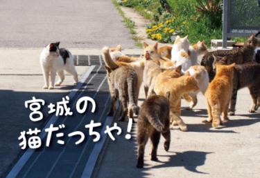 宮城県の猫スポット 23選
