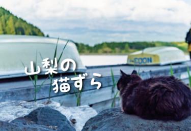 山梨県の猫スポット 9選