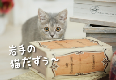 岩手県の猫スポット 16選