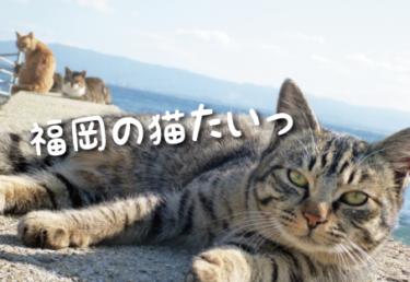 福岡県の猫スポット