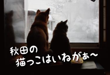 秋田県の猫スポット 14選