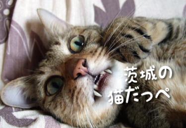 茨城県の猫スポット 15選