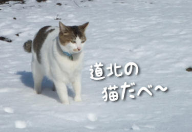 北海道/道北の猫スポット 11選