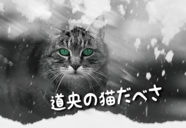北海道/道央の猫スポット 22選