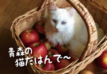 青森県の猫スポット 19選