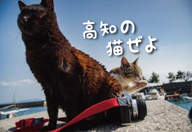 高知県の猫スポット 4選