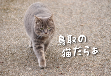 鳥取県の猫スポット 4選