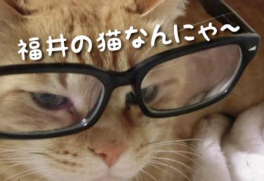 福井県の猫スポット 10選
