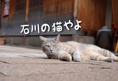 石川県の猫スポット 10選