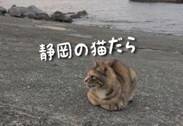 【2021年版】静岡県の猫スポット 27選