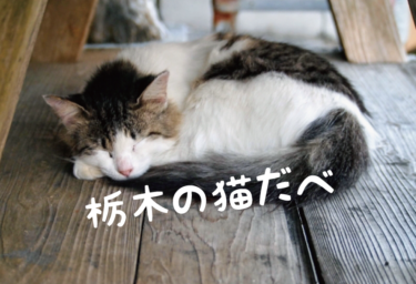 【2021年版】栃木県の猫スポット 20選