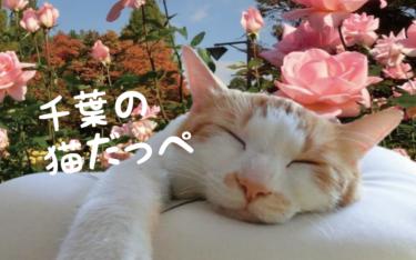【2021年版】千葉県の猫スポット 27選