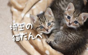 【2021年版】埼玉県の猫スポット 34選