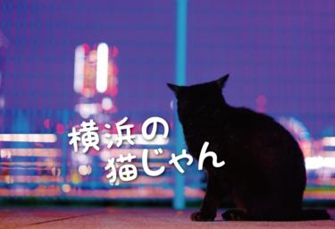 【2021年版】横浜市の猫スポット 24選