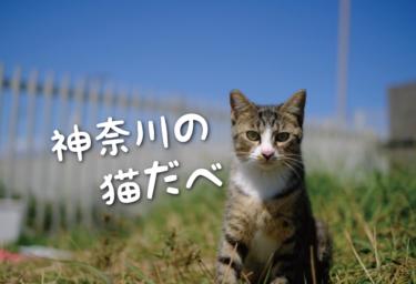 【2021年版】神奈川県の猫スポット(横浜市以外) 27選