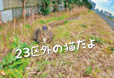 【2021年版】東京都23区外の猫スポット 31選