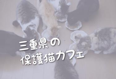 三重県の里親募集型の保護猫カフェ