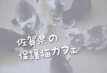 佐賀県の里親募集型の保護猫カフェ