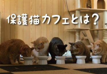 保護猫カフェとは?