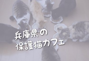 兵庫県の里親募集型の保護猫カフェ