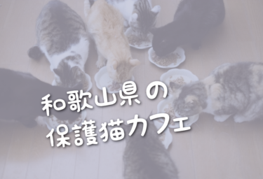 和歌山県の里親募集型の保護猫カフェ