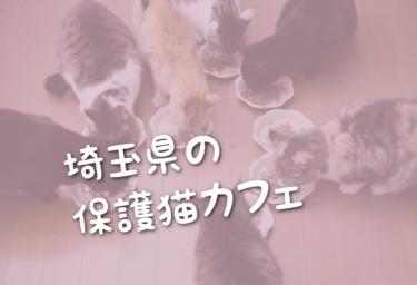 埼玉県の里親募集型の保護猫カフェ