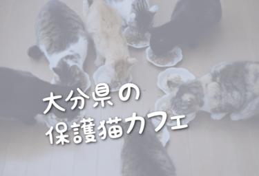 大分県の里親募集型の保護猫カフェ