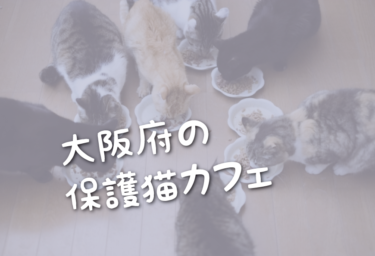 大阪府の里親募集型の保護猫カフェ
