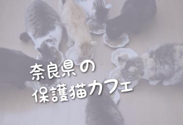 奈良県の里親募集型の保護猫カフェ