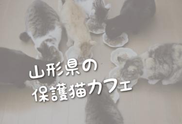 山形県の里親募集型の保護猫カフェ
