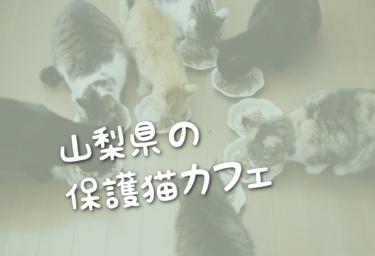 山梨県の里親募集型の保護猫カフェ