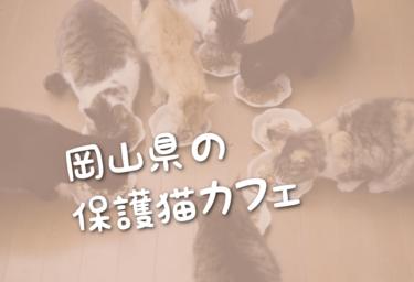 岡山県の里親募集型の保護猫カフェ