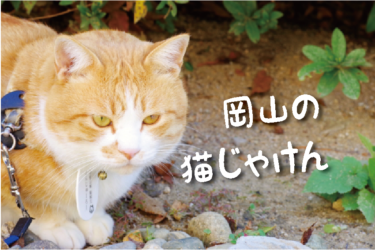 【2021年版】岡山県の猫スポット 18選