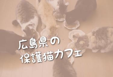広島県の里親募集型の保護猫カフェ