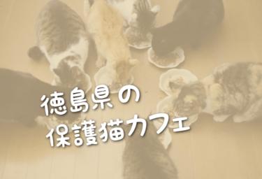 徳島県の里親募集型の保護猫カフェ