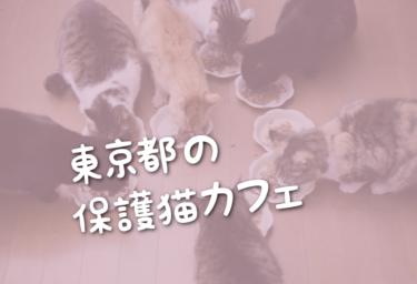 東京都の里親募集型の保護猫カフェ