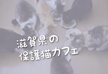滋賀県の里親募集型の保護猫カフェ