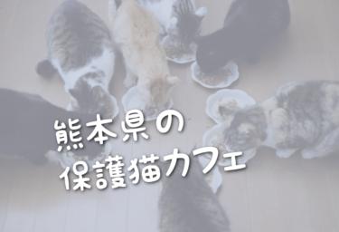 熊本県の里親募集型の保護猫カフェ