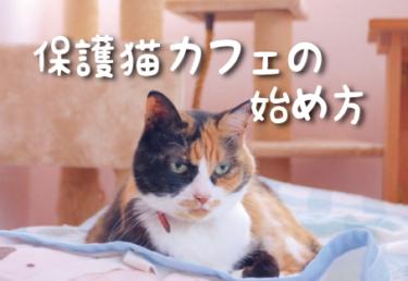 保護猫カフェの始め方