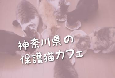 神奈川県の里親募集型の保護猫カフェ