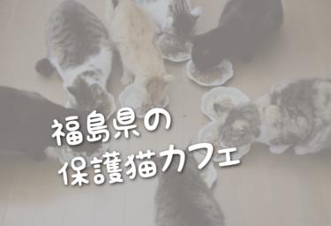 福島県の里親募集型の保護猫カフェ