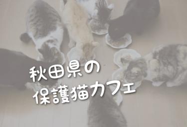 秋田県の里親募集型の保護猫カフェ