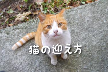 猫の迎え方