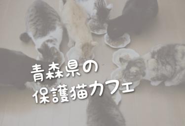 青森県の里親募集型の保護猫カフェ