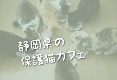 静岡県の里親募集型の保護猫カフェ