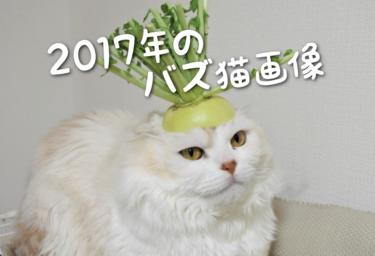【2017年版】SNSでバズった猫画像集