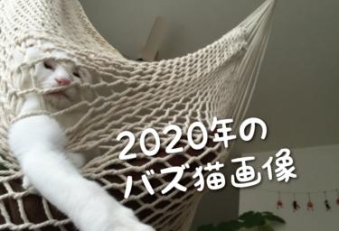 【2020年版】SNSでバズった猫画像集
