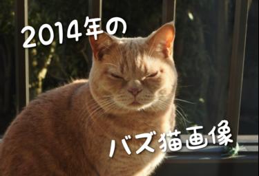 【2014年版】SNSでバズった猫画像集