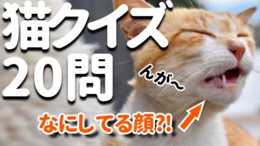 猫に関する簡単なクイズ 20問